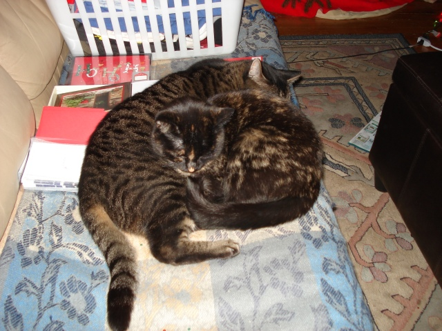 The cats helping me with Christmas card writing