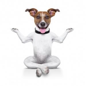 dog yoga 2